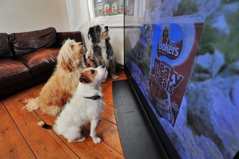 ¿Los perros pueden ver la televisión