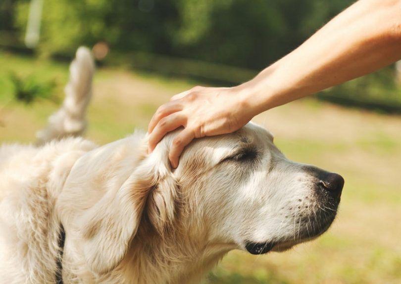 Los seres humanos pueden Obtener gusanos de perros