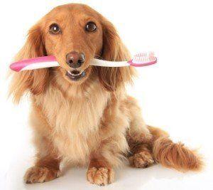 ¿Puedo limpiar los dientes de mi perro?