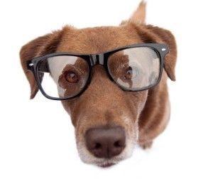 ¿Puedo obtener mis gafas para perros?