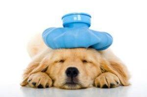 ¿Puedo obtener mi seguro de salud del perro?