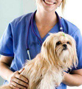 ¿Puedo obtener mi perro Cirugía Plástica?