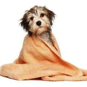 Puedo dar a mi perro un baño con champú humano?