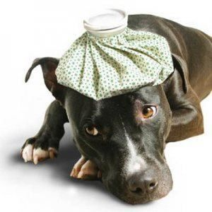 ¿Puedo darle a mi perro un resfriado?