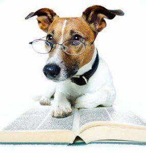 ¿Puedo darle a mi perro un test de inteligencia?