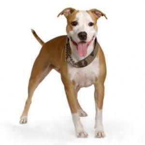 ¿Puedo dar mis antibióticos para perros?