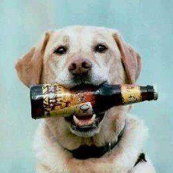 ¿Puedo dar mi cerveza perro?