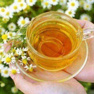 ¿Puedo dar mi té de manzanilla hedionda?