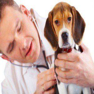 ¿Puedo dar mis descongestionantes perro?