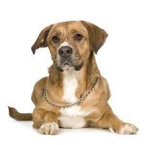 ¿Puedo darle a mi perro diarrea medicamento?