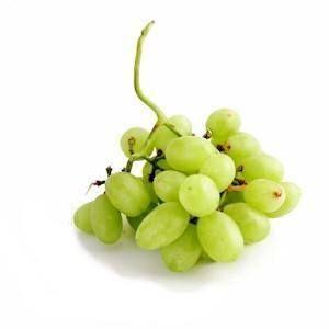 ¿Puedo dar mis uvas perro?