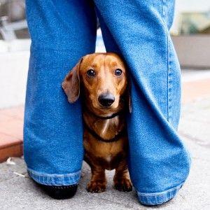¿Puedo dar mis relajantes musculares perro?
