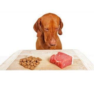 ¿Puedo dar a mi perro alimentos crudos?