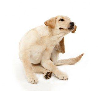 ¿Puedo darle a mi perro algo para las alergias?