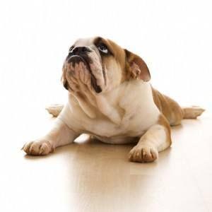 ¿Puedo darle a mi perro algo para la artritis?