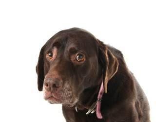 ¿Puedo darle a mi perro algo para la depresión?
