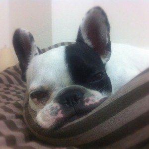 ¿Puedo darle a mi perro algo para las náuseas?