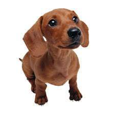¿Puedo dar mis sobras de comida para perros?