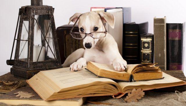 Las pruebas de CI caninos sugieren la presencia de un factor g