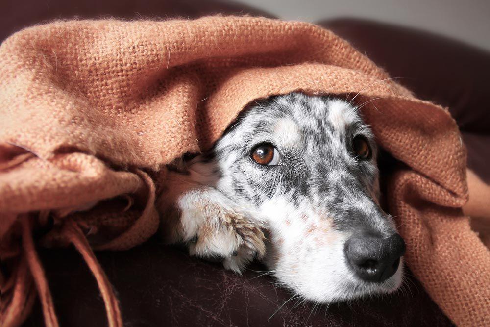 Negocios y consumo de cannabis en la industria del PET Estados Unidos - Perros