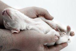 El cuidado de los cachorros nacidos nuevas