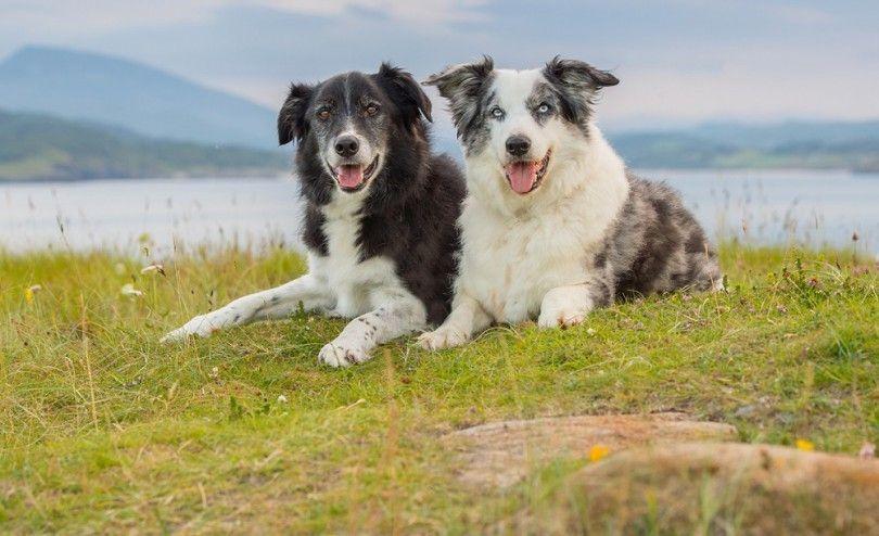 Los perros mayores