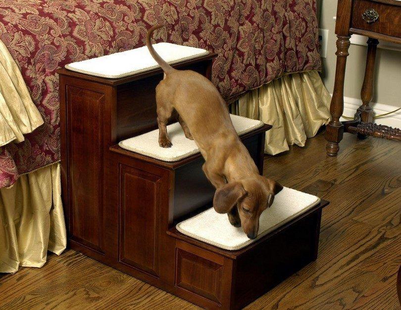 Pasos para perros mayores