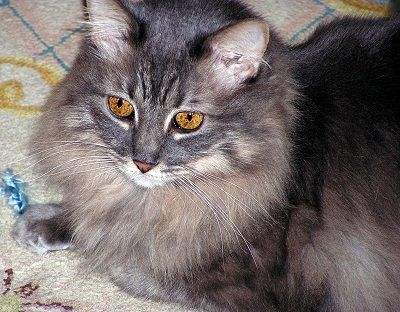 Las bolas de pelo de gato