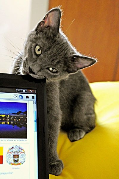 El gato estГЎ destruyendo su hogar