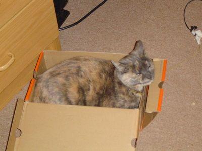 Gato formación caja de arena