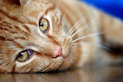 Medicamentos negarse gato