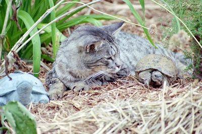 TiГ±a del gato