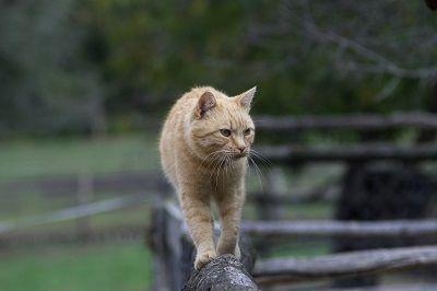 Derramamiento del gato
