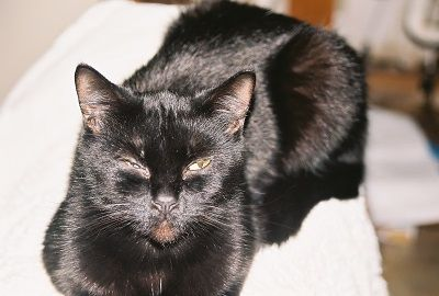 Manchas de lГЎgrimas gato