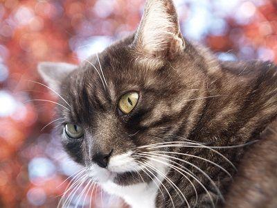 Vómito del gato