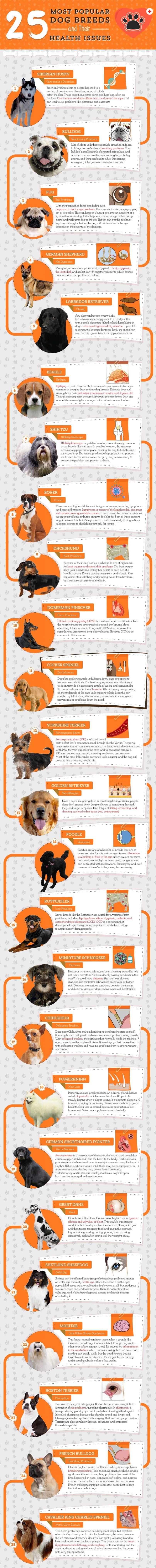razas de perros y sus problemas de salud