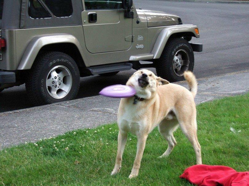Perro con cataratas