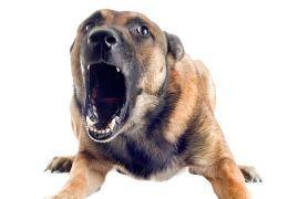 Perro con la boca abierta