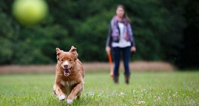 Cesar millan en la magia de fomentar un perro