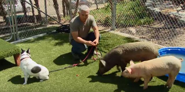 Cesar millan siendo investigado por posible crueldad animal