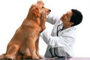 Chicago inicio introduce tecnología de seguro del animal doméstico