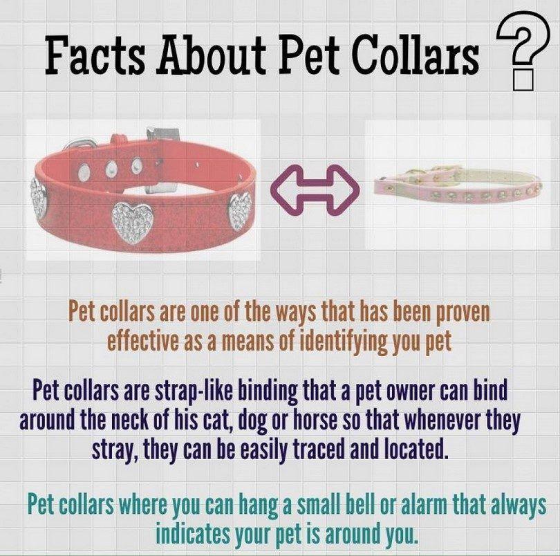 infografía collar de perro