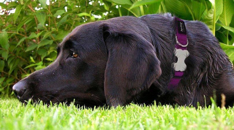 La elección de los mejores collares para perros, correas y arneses de seguridad y protección: en primer lugar