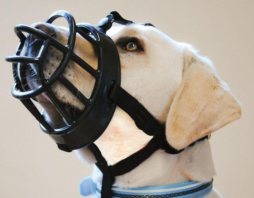 El hocico del perro de Baskerville Ultra