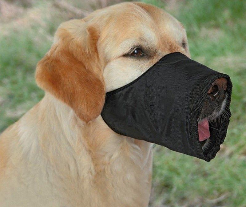 hocico del perro de nylon