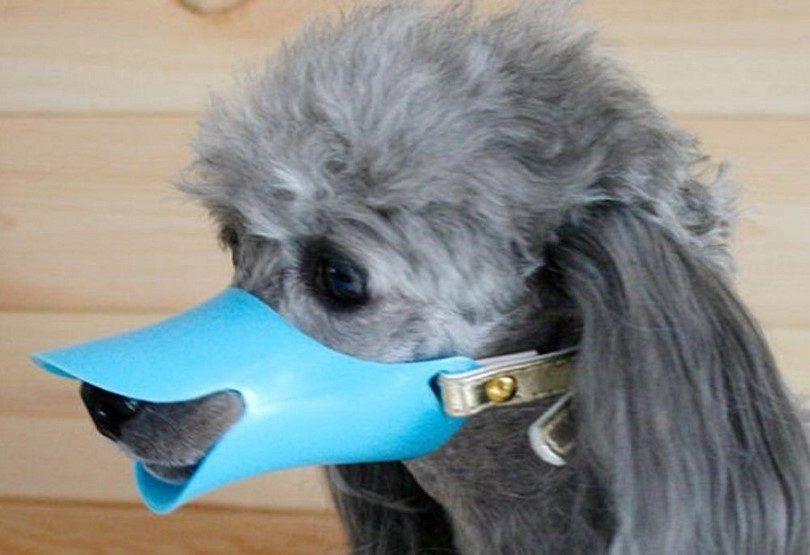 Silicona hocico del perro