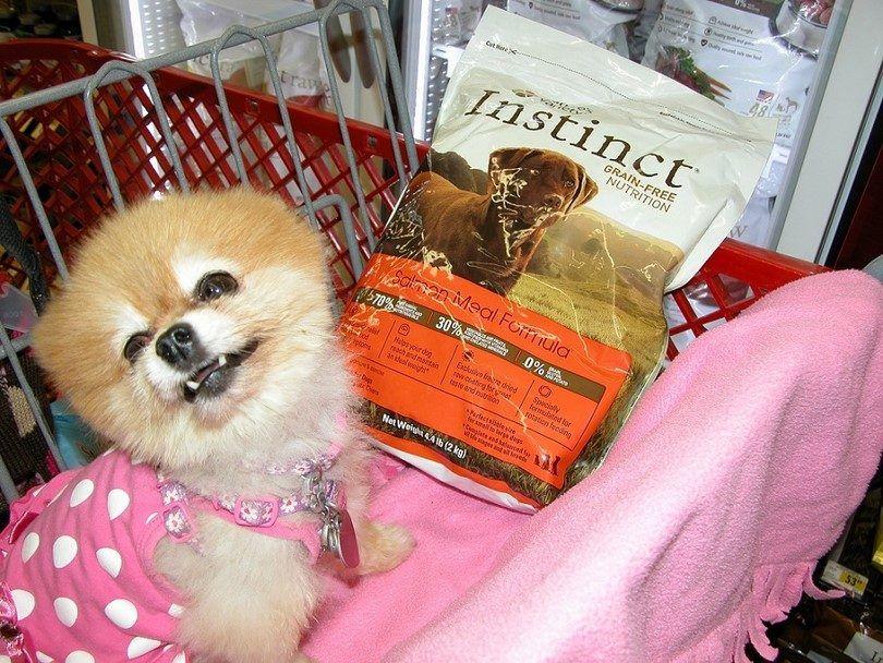 Perro y croquetas secas
