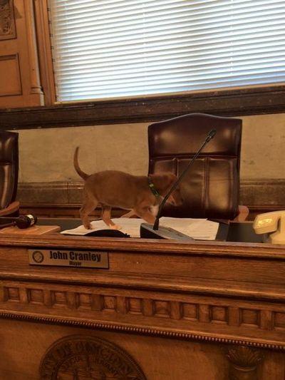 Cincinnati Ayuntamiento podrГa ir a los perros