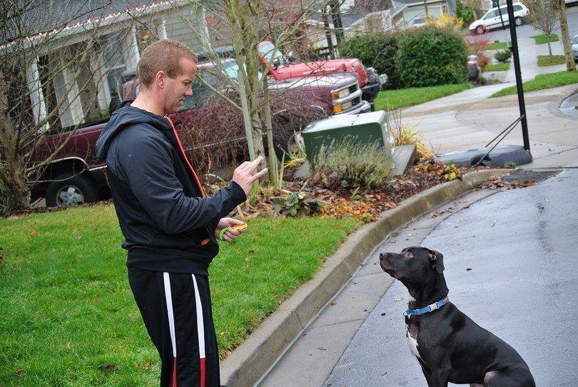 entrenamiento del perro de Clicker