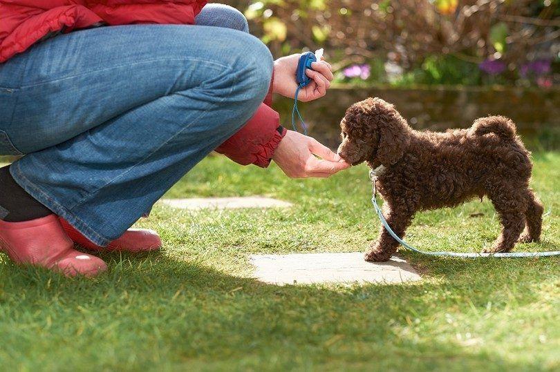 Premiando su perro después del entrenamiento con clicker